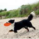 Disco Dog Activity